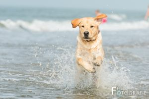 Hondenfotografie - HvZ fotografie