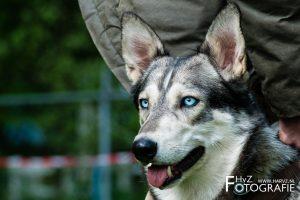 HvZ fotografie   American Indian Dogs